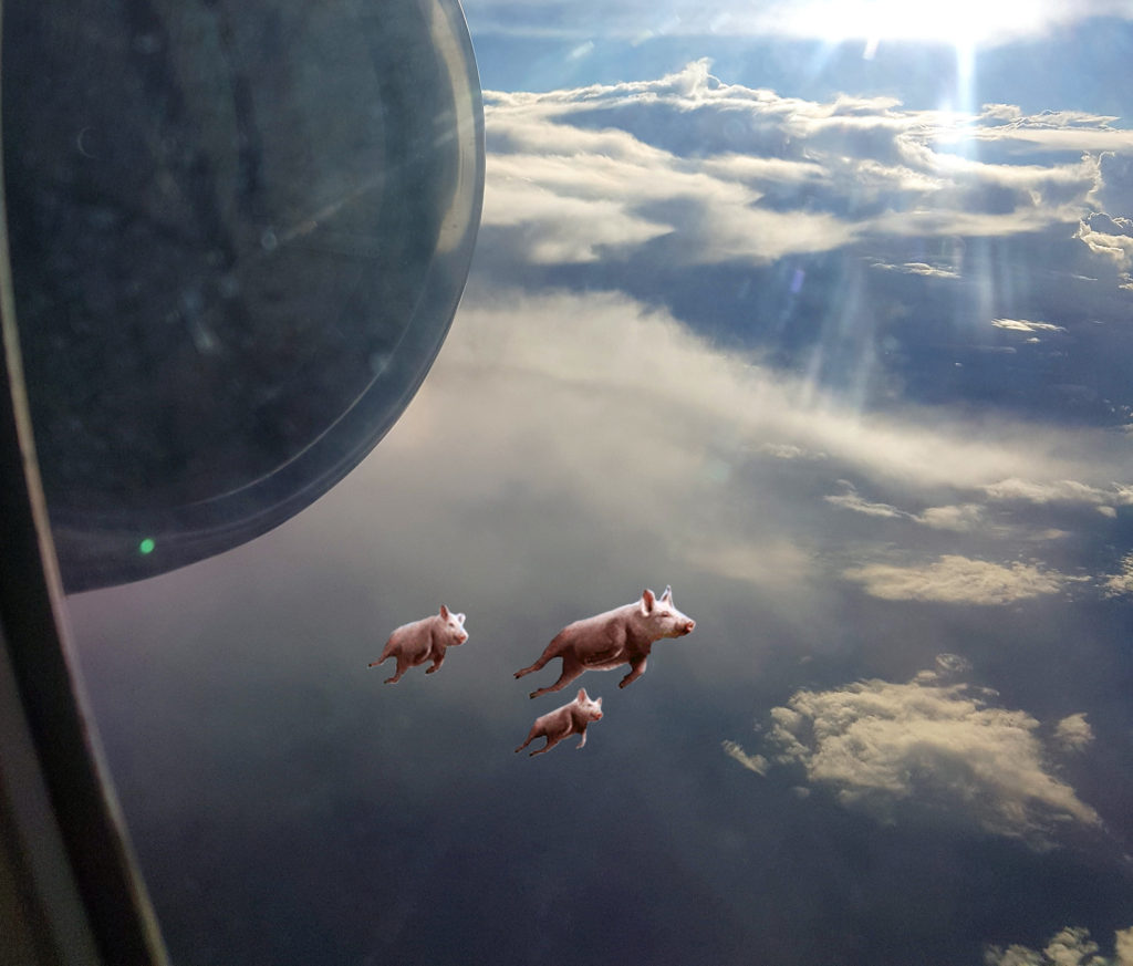 Pigs A Flying